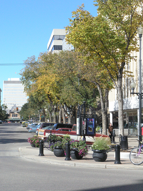 Planted as a street tree in Saskatoon, photographed in September.